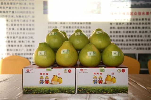 《颜值经济新时代,看梅州柚如何找到区域公用品牌营销新方向》