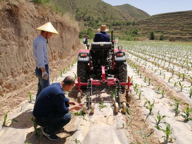 玉米稳产高产节水抗旱割苗机正在申报河北省科技成果