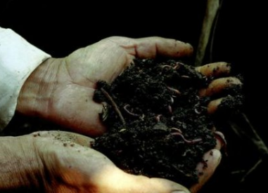 """土壤微生物的""""食物""""与""""分泌物"""""""