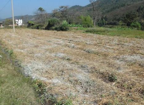 杀菌杀虫、改良土壤、增加养分…生石灰用得越多效果越好?