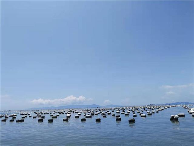 玛塔牡蛎钙走向世界,服务全球品质农业!