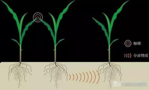 """英媒:植物通过""""交谈""""避免生长竞争"""