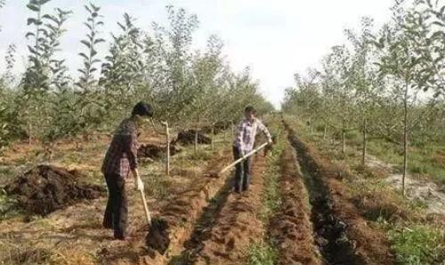 基肥改良土壤,改善农作物品质