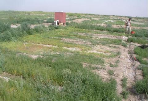 如何通过合理施肥解决土壤盐碱的问题,让改良与利用同等重要
