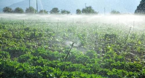 土壤的矿物质和作物的营养
