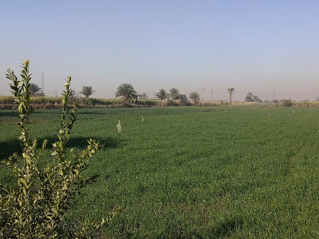 走进一带一路,实现优势互补,赴埃及种植业考察见闻