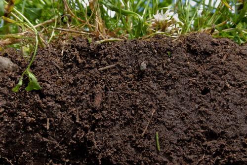 用什么可以解决土壤板结和酸碱度?生物有机肥的重要性