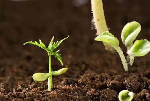 重磅方案:《耕地质量保护与提升行动方案》,值得你关注!