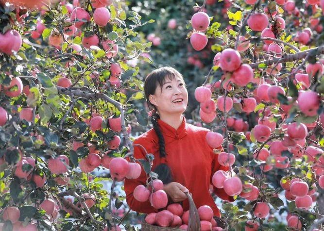 富硒酵素山地苹果,吃出安全健康与美味!
