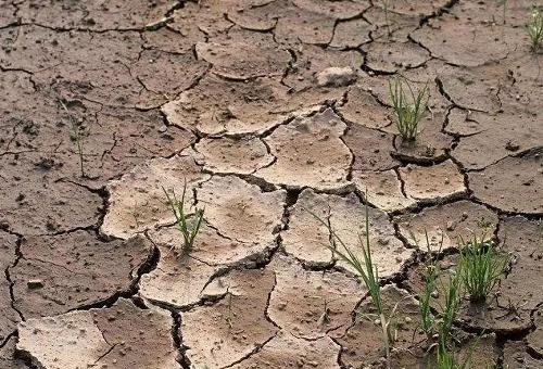重磅:究竟怎样正确的改良土壤呢?