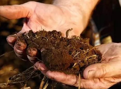 """土壤有机质下降的""""后果""""!所有人都应该看看"""
