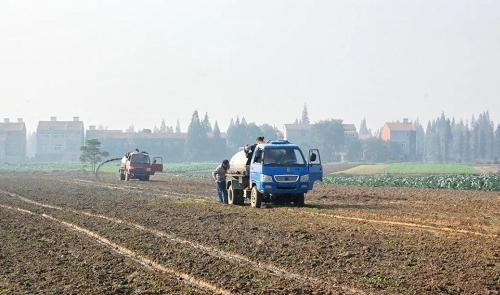 为何越来越多的农户放弃用鸡粪?原来是这个原因