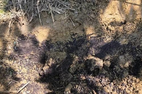 酸性土壤改良的理想措施