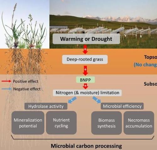 """气候变化下土壤微生物""""怠工""""记"""