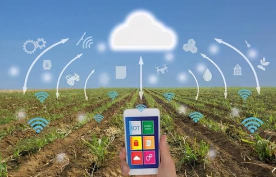 助力园艺产业转型互联网,推动线上平台布局怎么做?中国基质土商城给出了答案!
