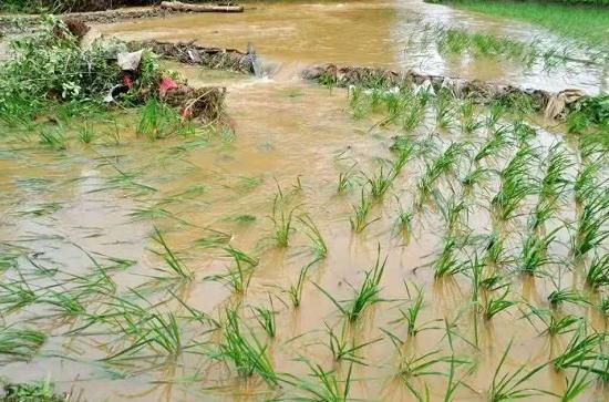 74家农资生产企业为河南灾区捐助农资物品