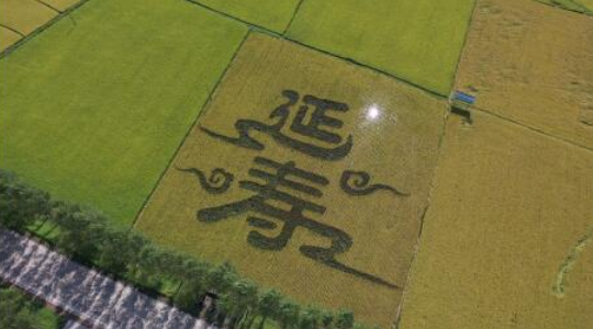 2021黑龙江·延寿第五届新米节将于9月17日举办