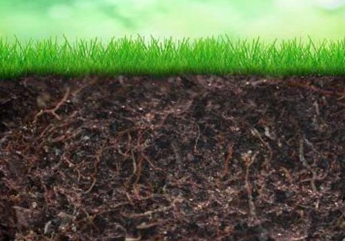 仅仅几种常见的细菌群就吞噬了土壤中的大部分碳