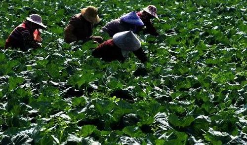 日本人在中国租了1500亩地,闲置5年任荒草疯长,但结果让中国人大吃一惊