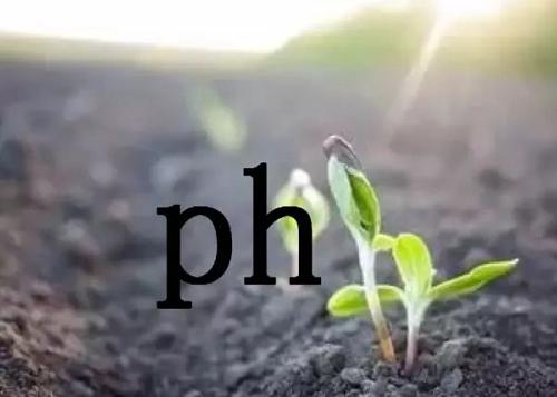 土壤酸碱度失衡有多可怕?看完这篇文章你会大涨见识!