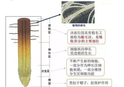 土壤中养分是如何被转化吸收的?