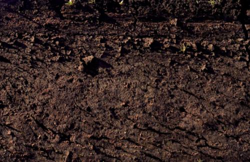 """新型能源公司:变废为""""肥"""" 助力土壤改良"""