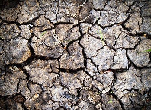 土壤如果出现绿苔、红霜、白霜现象,必须警惕!