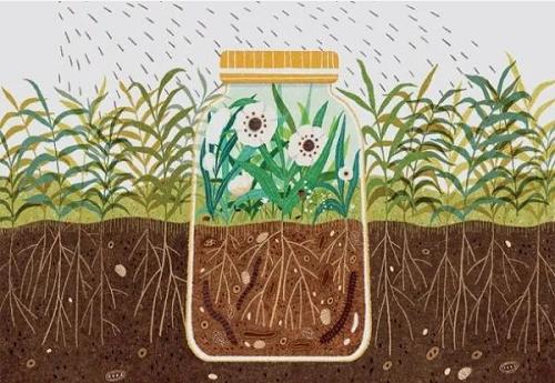 农药正在破害土壤健康