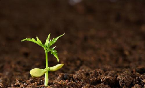 改善土壤环境,再现土壤生命活力