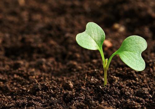 土壤颜色发生变化说明土壤出了大问题......!